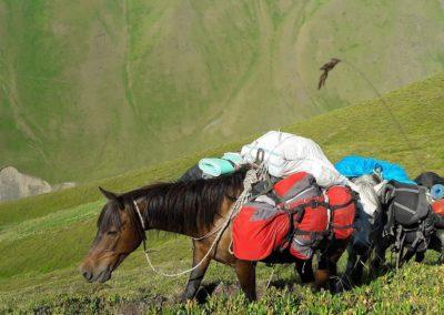 Konie tragarze